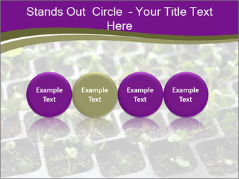 Tomatoes in soil PowerPoint Template - Slide 76