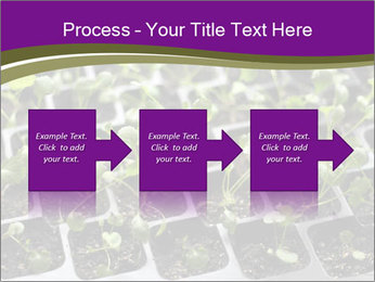 Tomatoes in soil PowerPoint Template - Slide 88