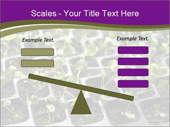 Tomatoes in soil PowerPoint Template - Slide 89