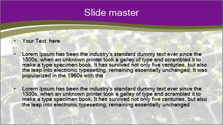 Tomatoes in soil PowerPoint Template - Slide 2
