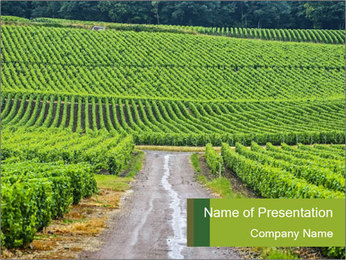 Vineyards in Champagne PowerPoint Template - Slide 1