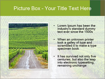 Vineyards in Champagne PowerPoint Template - Slide 13