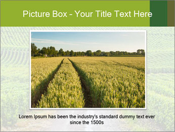 Vineyards in Champagne PowerPoint Template - Slide 15