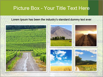 Vineyards in Champagne PowerPoint Template - Slide 19