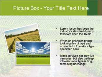 Vineyards in Champagne PowerPoint Template - Slide 20