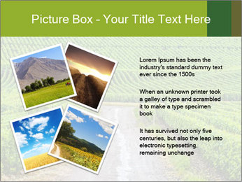 Vineyards in Champagne PowerPoint Template - Slide 23
