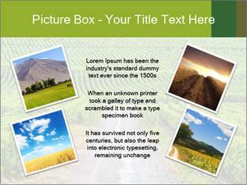 Vineyards in Champagne PowerPoint Template - Slide 24