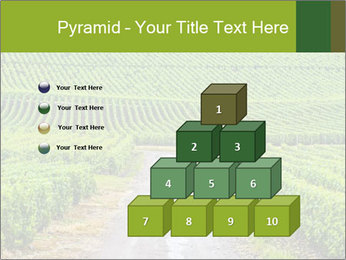 Vineyards in Champagne PowerPoint Template - Slide 31