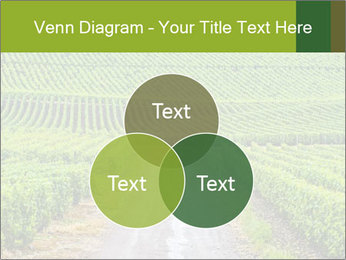 Vineyards in Champagne PowerPoint Template - Slide 33