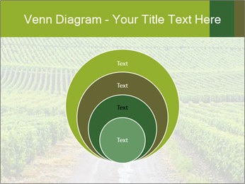 Vineyards in Champagne PowerPoint Template - Slide 34