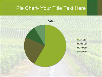 Vineyards in Champagne PowerPoint Template - Slide 36