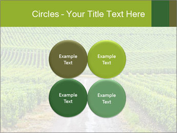 Vineyards in Champagne PowerPoint Template - Slide 38