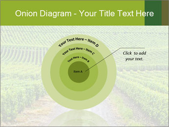 Vineyards in Champagne PowerPoint Template - Slide 61