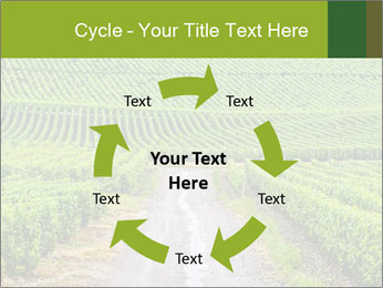 Vineyards in Champagne PowerPoint Template - Slide 62