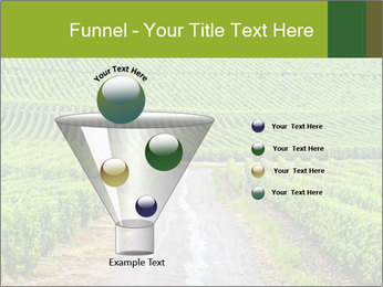 Vineyards in Champagne PowerPoint Template - Slide 63