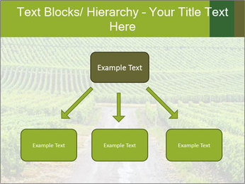 Vineyards in Champagne PowerPoint Template - Slide 69