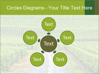 Vineyards in Champagne PowerPoint Template - Slide 78
