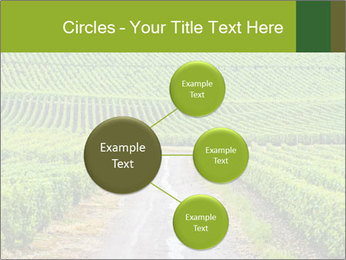Vineyards in Champagne PowerPoint Template - Slide 79