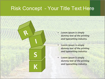 Vineyards in Champagne PowerPoint Template - Slide 81