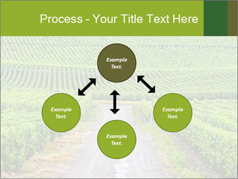 Vineyards in Champagne PowerPoint Template - Slide 91