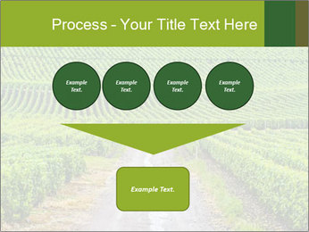 Vineyards in Champagne PowerPoint Template - Slide 93