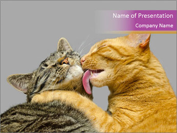 Cats PowerPoint Templates - Slide 1