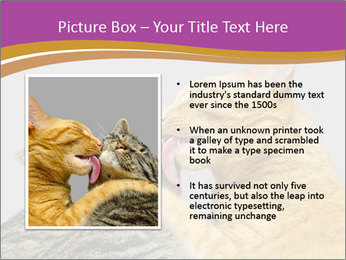 Cats PowerPoint Template - Slide 13