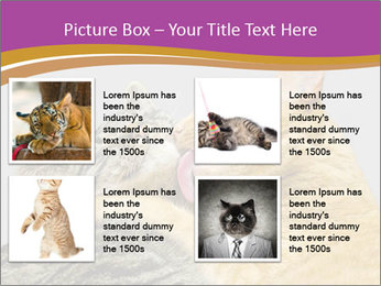 Cats PowerPoint Template - Slide 14