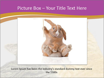 Cats PowerPoint Templates - Slide 15