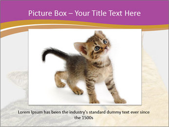 Cats PowerPoint Template - Slide 16