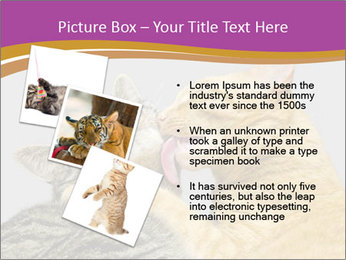 Cats PowerPoint Template - Slide 17