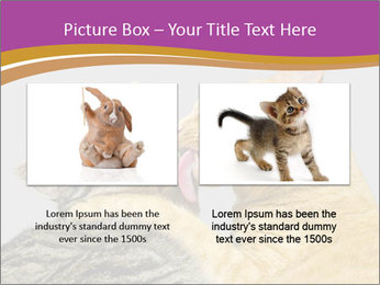 Cats PowerPoint Template - Slide 18