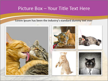 Cats PowerPoint Template - Slide 19