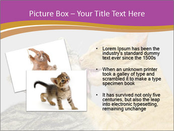 Cats PowerPoint Template - Slide 20