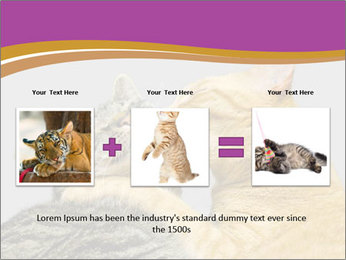 Cats PowerPoint Template - Slide 22