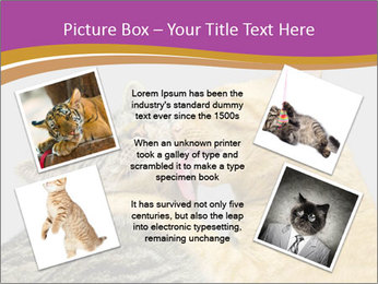 Cats PowerPoint Template - Slide 24