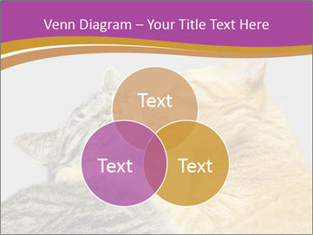 Cats PowerPoint Template - Slide 33