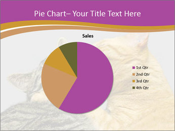 Cats PowerPoint Template - Slide 36