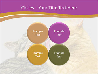 Cats PowerPoint Template - Slide 38