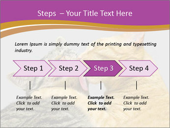 Cats PowerPoint Templates - Slide 4