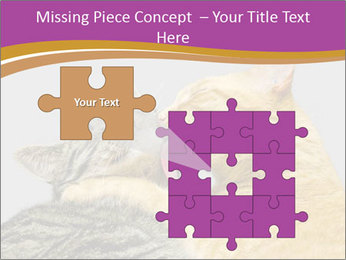 Cats PowerPoint Template - Slide 45