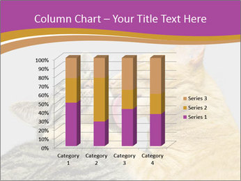Cats PowerPoint Template - Slide 50