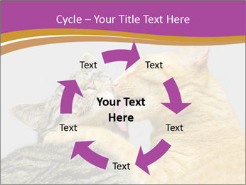 Cats PowerPoint Templates - Slide 62