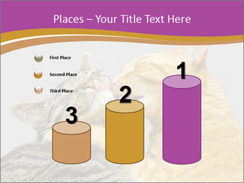 Cats PowerPoint Template - Slide 65