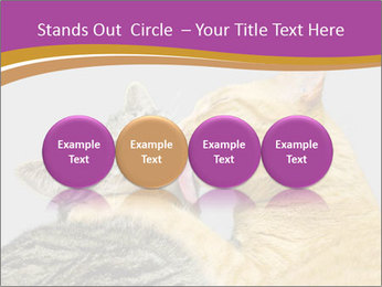 Cats PowerPoint Templates - Slide 76