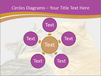 Cats PowerPoint Templates - Slide 78
