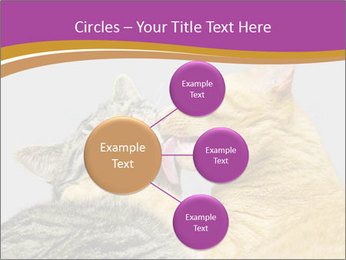 Cats PowerPoint Template - Slide 79