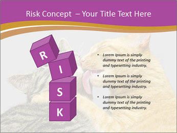 Cats PowerPoint Template - Slide 81
