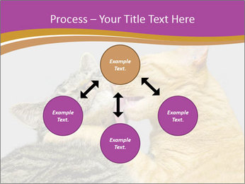 Cats PowerPoint Templates - Slide 91