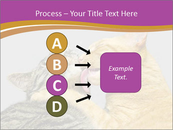 Cats PowerPoint Template - Slide 94